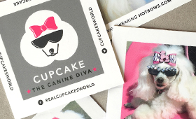 Cupcake: The Canine Diva